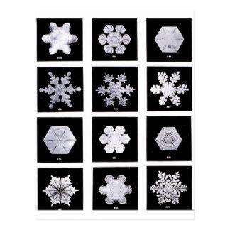 O floco de neve chapeia a fotografia do tempo cartão postal