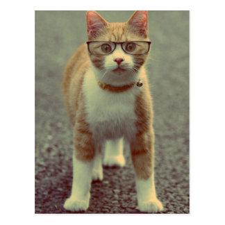 O gato amarelo balança os vidros cartão postal