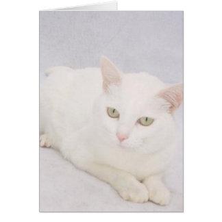 O gato branco pequeno cartão comemorativo