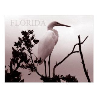 O grande Egret - chaves de Florida Cartao Postal