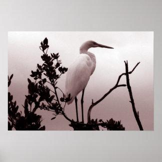 O grande Egret, chaves de Florida Pôsteres