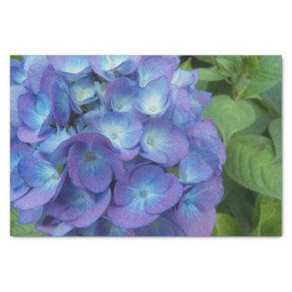 O Hydrangea azul floresce floral Papel De Seda