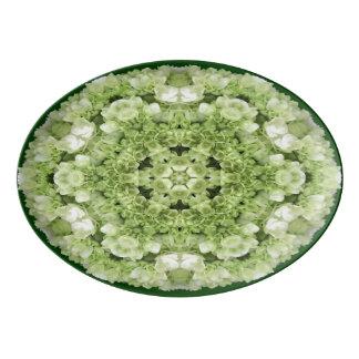 O Hydrangea verde floresce a bandeja da porcelana