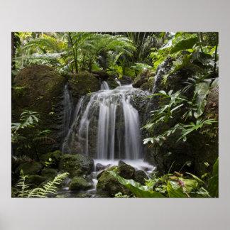 O jardim botânico tropical de Fairchild é uns 33 h Poster