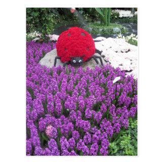 O joaninha de LadyLUCK floresce o jardim roxo da b