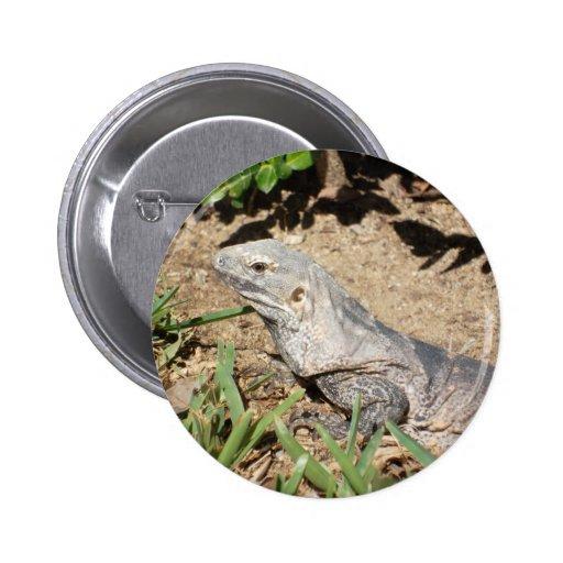 O lagarto boton