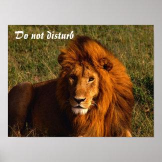 O leão não perturba posters