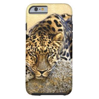 O leopardo de Amur Capa Para iPhone 6 Tough