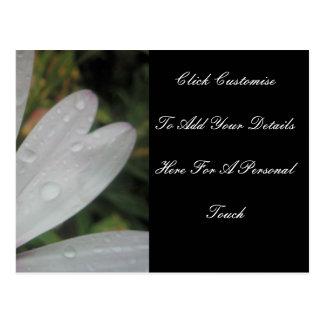 O Lilac ilumina a margarida do casamento Cartão Postal