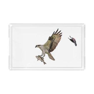 O Osprey que está sendo perseguido por um vermelho Bandeja De Acrílico