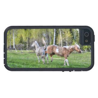 O Palomino Bucking pinta & o cavalo branco, Cavalo Capa iPhone 5 Case-Mate