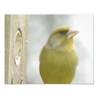 o pássaro impressão de foto