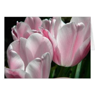 O primavera cor-de-rosa das tulipas floresce o Cen Cartão Comemorativo