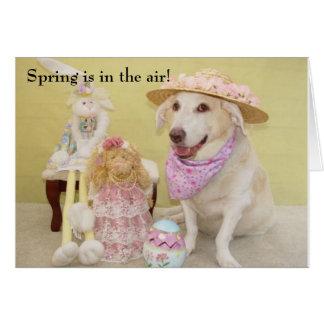 O primavera está no ar! cartão