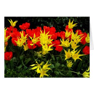 O primavera floresce a estrela amarela e tulipas v cartão comemorativo