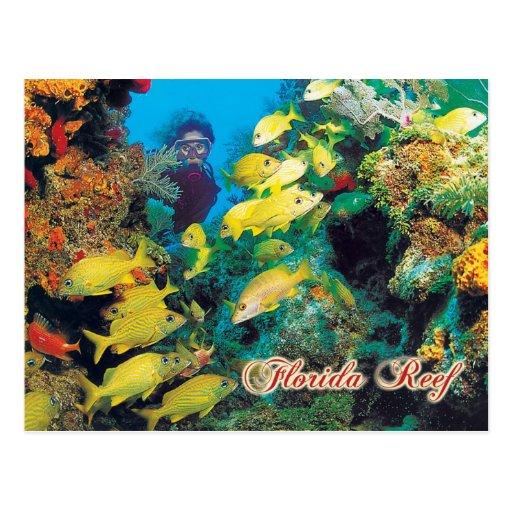 O recife de Florida nas chaves de Florida Cartao Postal