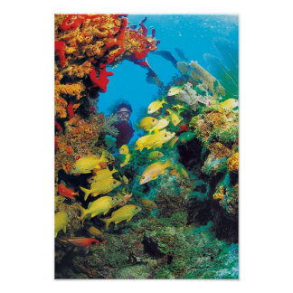 O recife de Florida nas chaves de Florida Poster