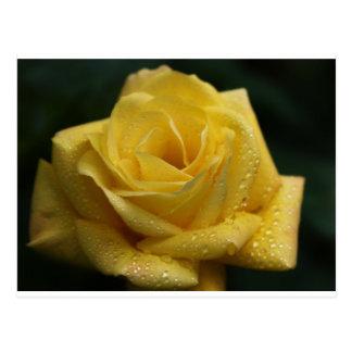 O rosa amarelo cartão postal
