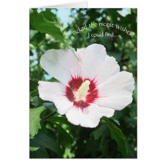 O rosa da flor do verão de Sharon floral obtem a Cartão Comemorativo