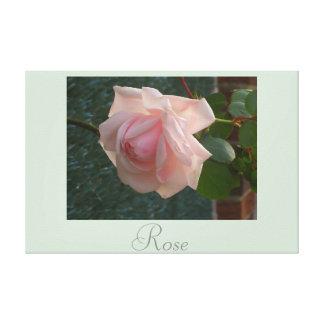 O rosa do rosa floresce a fotografia 2 da natureza impressão de canvas envolvidas