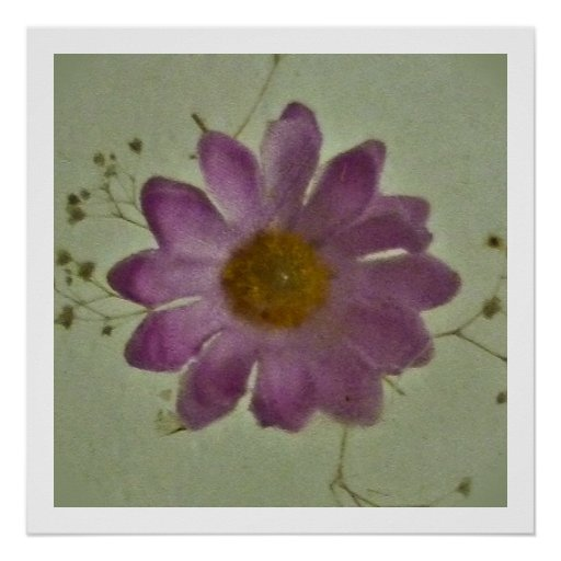 O rosa floresce o design decorativo impressão