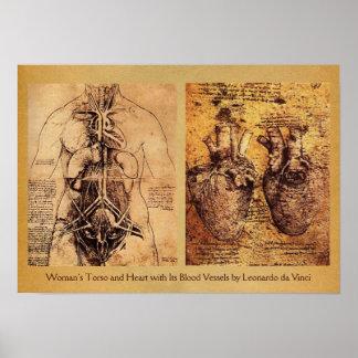 O torso da mulher/coração e os seus vasos sanguíne poster