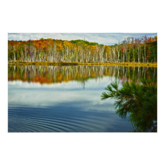 O U.P.: Reflexões da árvore de vidoeiro do outono Poster