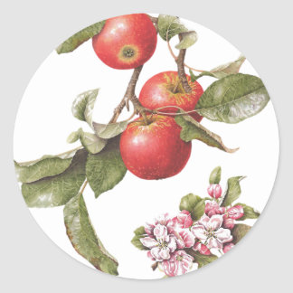 O vintage Apple floresce etiqueta Adesivo