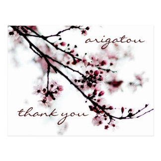 Obrigado da flor de cerejeira você cartão postal