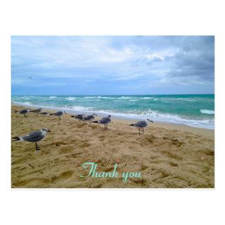 Obrigado da praia da gaivota você cartão cartão postal