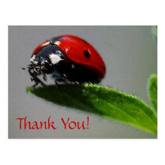Obrigado do joaninha você! cartão postal