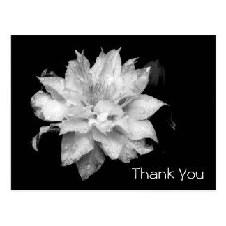 Obrigado memorável da simpatia do Clematis 3b você Cartão Postal