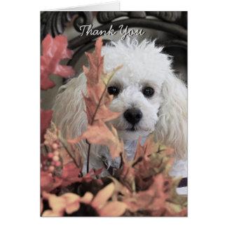 Obrigado notecard do cão de caniche cartão de nota