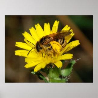 Ocupado como uma abelha pôsteres