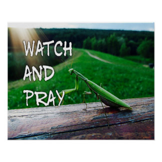 Olhe e Pray o poster