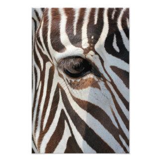 Olho da zebra impressão de foto