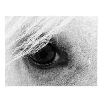 Olho do cavalo em preto e branco cartão postal