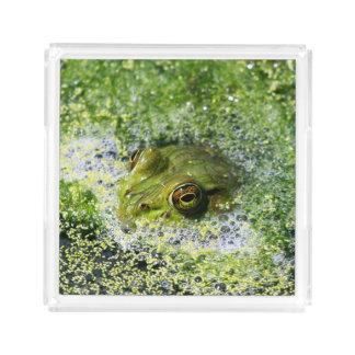 Olhos do sapo em uma lagoa bandeja de acrílico
