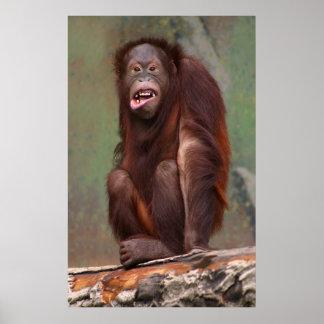 Orangotango de riso pôsteres