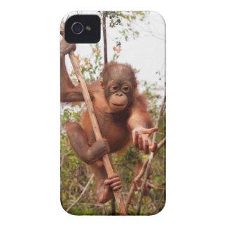 Orangotango do pedreiro do salvamento dos animais capas para iPhone 4 Case-Mate
