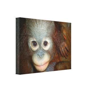 Orangotango doce do bebê