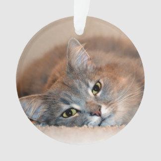 Ornamento Cinzas, Tan, gato de cabelos compridos branco por