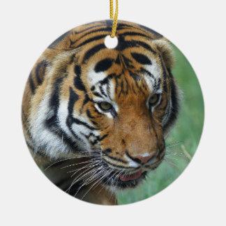 Ornamento De Cerâmica Fim-acima do tigre do Malay dos alugueres