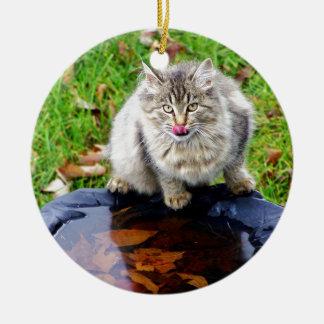 Ornamento De Cerâmica Gato de gato malhado selvagem com um olhar