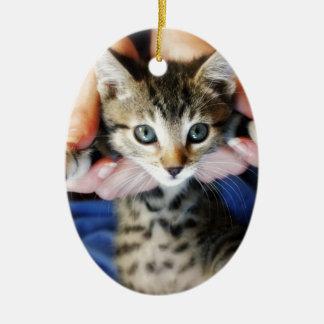 Ornamento De Cerâmica Pendurando para fora o gato malhado