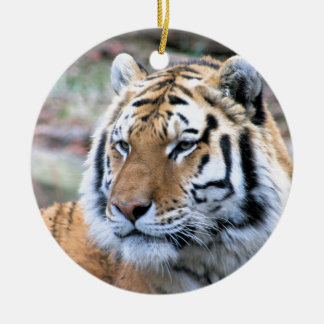 Ornamento De Cerâmica Tigre de Bengal real estóico dos alugueres