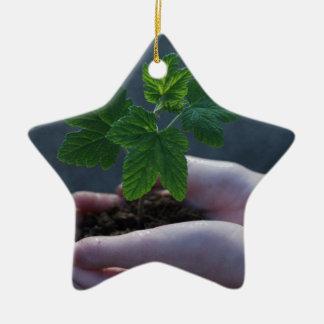Ornamento De Cerâmica Um sprout em uma mão