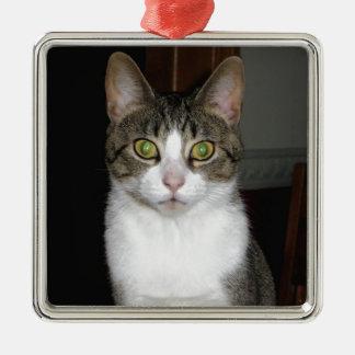 Ornamento De Metal Gato de gato malhado com os olhos verdes grandes