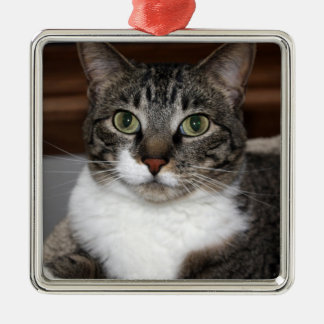 Ornamento De Metal Gato de gato malhado que olha o foto