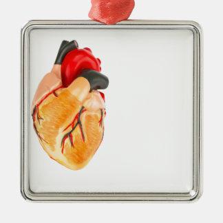 Ornamento De Metal Modelo humano do coração no fundo branco